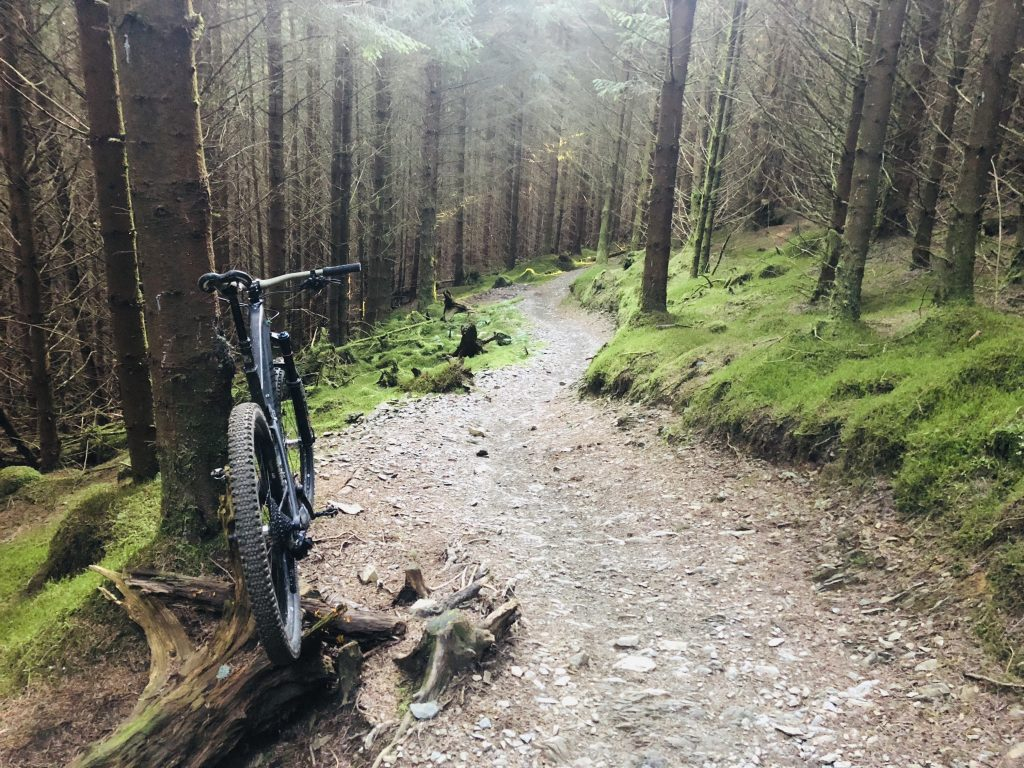 Whinlatter Trails