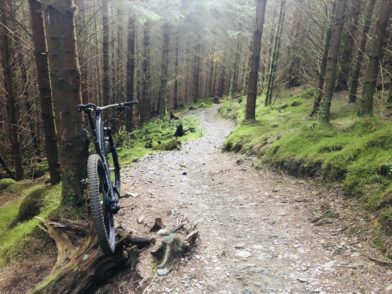 Whinlatter Trails