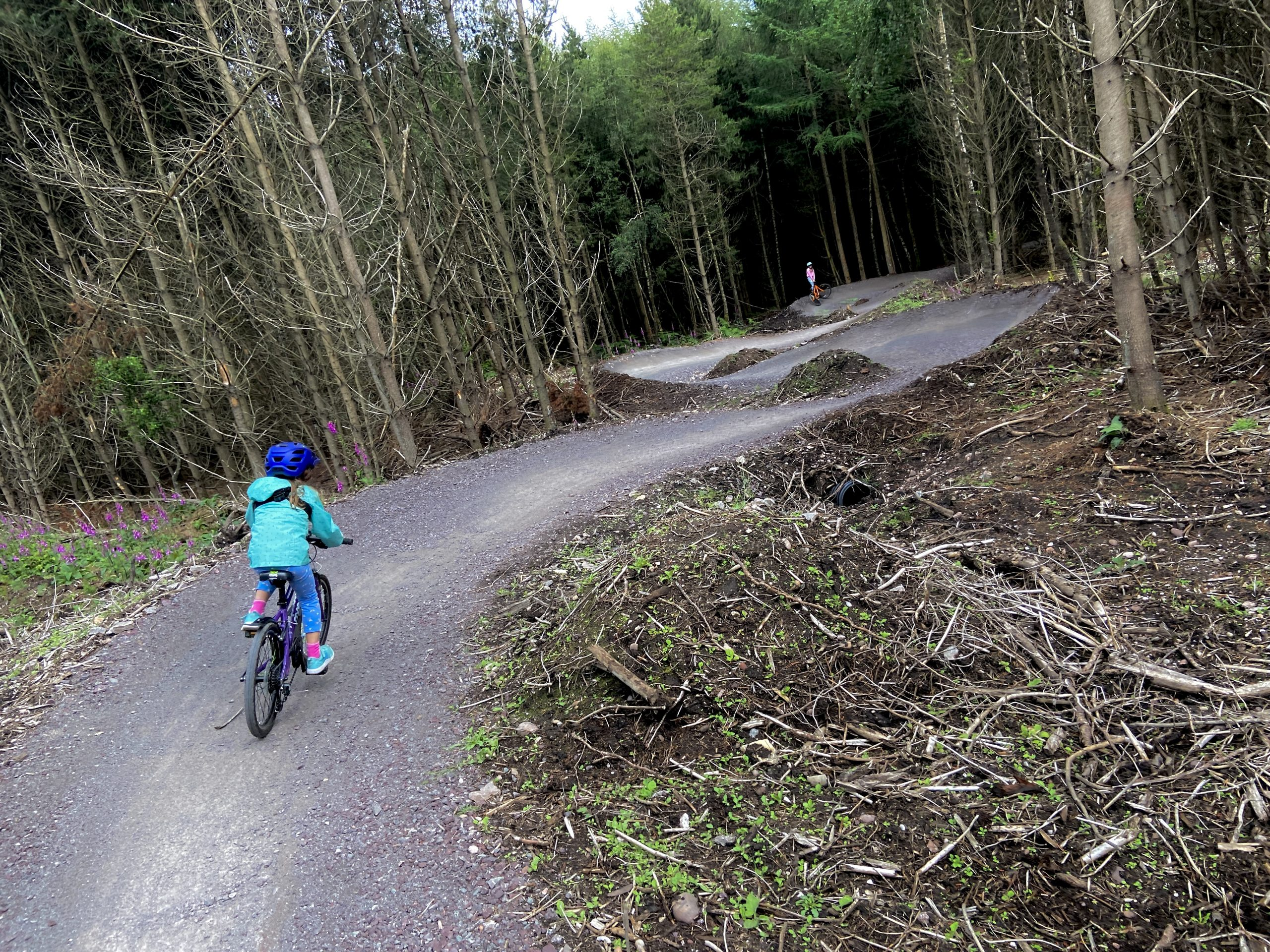 Berms on the Blue Route Cannock Chase